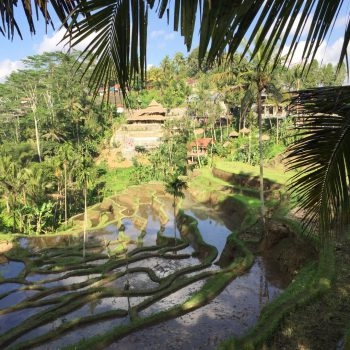 Riževa polja Indonezija